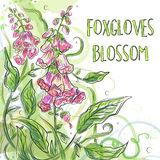 Vector floral blossom beautiful nature garden digitalis, purple Royalty Free Stock Image