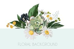 Vector floral bouquet design: garden chamomile camomile flower, berries branch, green leaves. stock illustration
