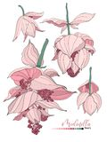 Vector floral bouquet design: garden pink peach lavender creamy powder pale Medinilla flower. Wedding vector invite card stock illustration