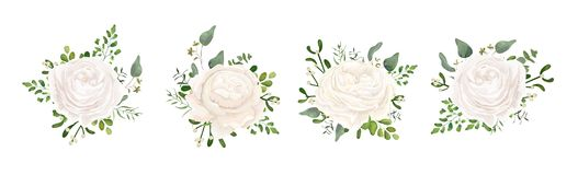 Vector floral bouquet design: white garden Ranunculus, Rose flow. Er, fern, eucalyptus, mistletoe branch greenery leaves berry. Wedding vector invite card Vector Illustration