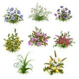Vector Floral Bush Set On Transparent Background Stock Images