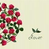 Vector floral card Stock Photos