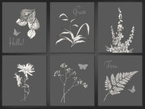 Vector floral card set Royalty Free Stock Photography