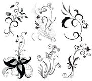 Vector Floral Decoration On White. Royalty Free Stock Photos