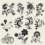 Vector floral design elements... Stock Images