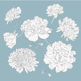 Vector floral design elements Stock Images