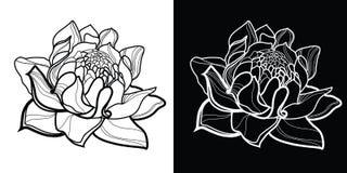 Vector floral design elements Stock Photo