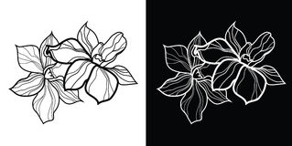 Vector floral design elements Stock Image