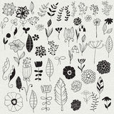 Vector Floral Design Elements Stock Photography