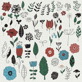 Vector  Floral Design Elements Stock Image