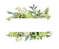 Vector floral design horizontal card design. Soft succulent, cac Royalty Free Stock Images