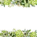 Vector floral design square card design. Soft succulent, cactus. Flower garden eucalyptus, green fern, seasonal branch and leaves mix. Greeting invitation Royalty Free Stock Photos