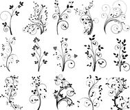 Vector floral elements for design Stock Images