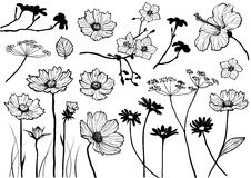 Vector floral elements. Set of floral element for design, vector illustration Royalty Free Stock Images