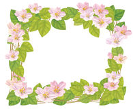 Vector floral frame. Stock Photos