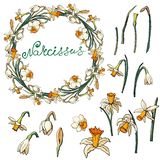 Vector floral frame with daffodils. On a white background. Isolated elements on white background royalty free illustration
