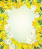 Vector floral frame with  dandelions. Royalty Free Stock Images