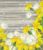 Vector floral frame with dandelions on wooden back Stock Image