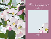Vector floral greeting card  gift card  apple blossoms   Stock Photos