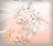 Vector floral illustration of colorful flowers Royalty Free Stock Images