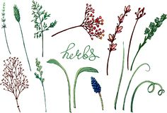 Vector floral illustration with herbs. stock illustration