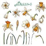 Vector floral illustration stock illustration