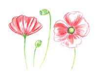 Vector Floral of Painted Colorful Flowers Watercolor Stock Image