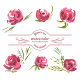 Vector Floral of Painted Red Roses Watercolor Royalty Free Stock Photography