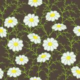 Vector floral pattern with camomiles Stock Image