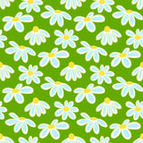 Vector floral pattern with cute daisies. Seamless floral pattern with spring flowers and leaves Royalty Free Stock Photos