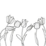 Vector floral seamless horizontal pattern. Black and white elegant background with hand drawn tulip flowers. Stock Photo