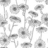 Vector floral seamless pattern. Black and white background with hand drawn sketched chamomile flowers. Royalty Free Stock Photo