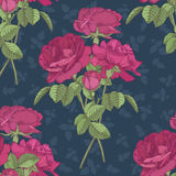 Vector floral seamless pattern with bouquets of dark pink roses Royalty Free Stock Photography