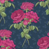 Vector floral seamless pattern with bouquets of dark pink roses Stock Images