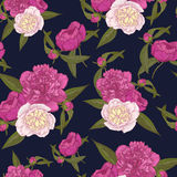 Vector floral seamless pattern with bouquets of hand drawn pink and white peonies on the dark blue background Stock Photography
