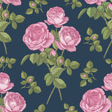 Vector floral seamless pattern with bouquets of pink roses Royalty Free Stock Photography