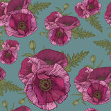 Vector floral seamless pattern with pink poppies Stock Photos