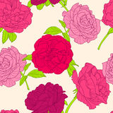 Vector floral seamless pattern. Summer background with pink hand drawn rose flowers. Stock Images