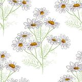 Vector floral seamless pattern with summer yellow herbs and chamomile camomile flowers. Black background royalty free illustration