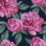 Vector floral seamless pattern with watercolor pink peonies. Royalty Free Stock Photos