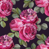 Vector floral seamless pattern with watercolor pink roses. Background with bouquets of hand drawn watercolor flowers royalty free illustration