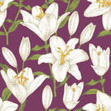 Vector floral seamless pattern with white lilies. Royalty Free Stock Images