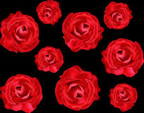 Vector floral seamless texture with realistic red roses Stock Photos