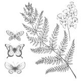 Vector floral set. Beautiful vector set with hand drawn fern leaves butterflies and flowers Stock Photos