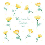 Vector floral set. Colorful floral collection with leaves and flowers, drawing watercolor. Spring or summer design for invitation, wedding or greeting cards Royalty Free Stock Images