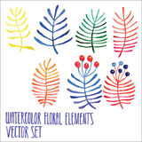Vector floral set. Colorful floral collection with leaves and berries, drawing watercolor. Spring or summer design for invitation, Stock Images