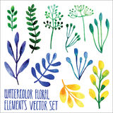 Vector floral set. Colorful floral collection with leaves, drawing watercolor. Spring or summer design for invitation, wedding or. Greeting cards. Set of floral vector illustration