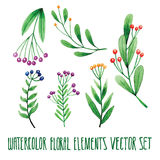 Vector floral set. Colorful floral collection with leaves, drawing watercolor. Spring or summer design for invitation, wedding or Stock Images