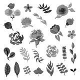 Vector floral set. Watercolor style design elements. Royalty Free Stock Photography