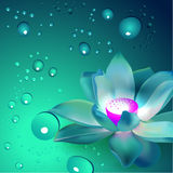 Vector flower with bubbles Royalty Free Stock Photography